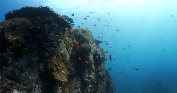 柏島で撮影した水中映像のサムネイル画像